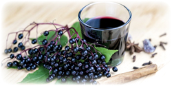 elderberry juice concentrate suppliers