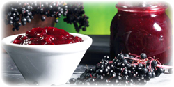 elderberry concentrate bulk usa